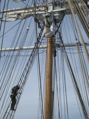 Top Sail 2013